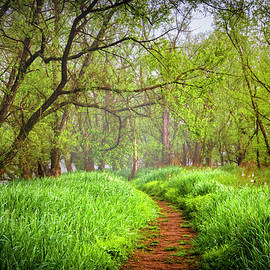 Trail on a Misty Morning by Debra and Dave Vanderlaan