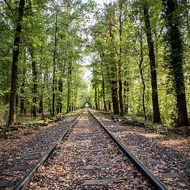 Train track in German park at sunny day by Rick Neves