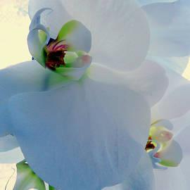 Transluscent Orchid by Jean Merrill