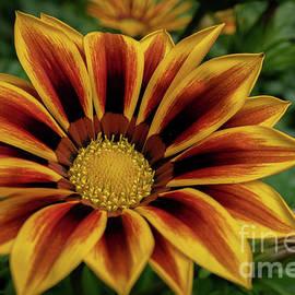Treasure Flower by Linda Howes