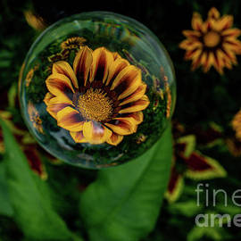 Treasure In A Crystal Ball by Linda Howes