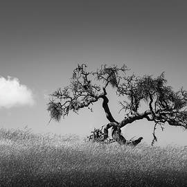 Tree and Cloud Carmel Valley CA BW by David Gordon