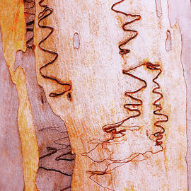 Tree Bark Series #45 Scribbly Gum