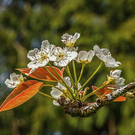 Tree Blossom 86 by Mike Penney