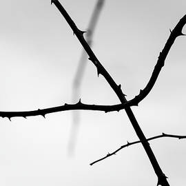 Tree Branches Silhouettes by Martin Vorel Minimalist Photography