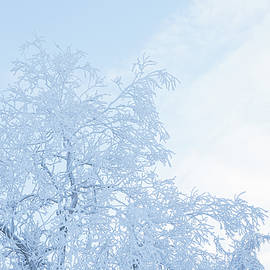 Tree covered in hoarfrost and sky by Juhani Viitanen