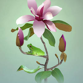 Tree Frog and Magnolia by Spadecaller
