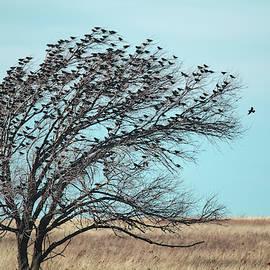 Tree Full of Birds by Karen Slagle