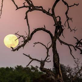Tree Holding the Moon by MaryJane Sesto