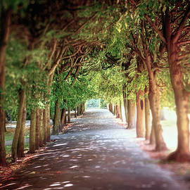 Tree Lined Path Oliwa Park Gdansk Poland  by Carol Japp