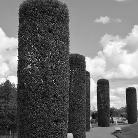 Tree Pillars In Black And White by Lesley Evered