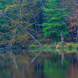 Tree Reflects Autumn by M E Cater