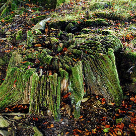 Tree Stump with Moss. by Bill Lee