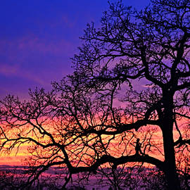 Tree Sunset Silhouette and Fairy Girl by Gaby Ethington