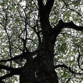 Tree Vein by Atiqur Rahman
