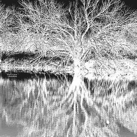Tree White and Black by Darius Xmitixmith