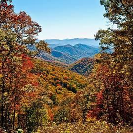 Tree Wilderness Trail Meadow Leaf  by Reuben Davis