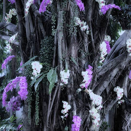 Tree with flowers by CJS Photoshop