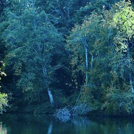 Trees Along Lake Edge by Ian Baird