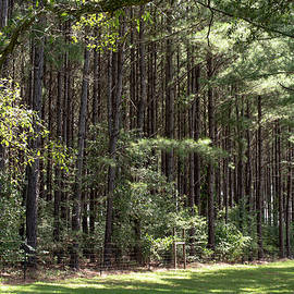 Trees and More Trees by Debra Kewley