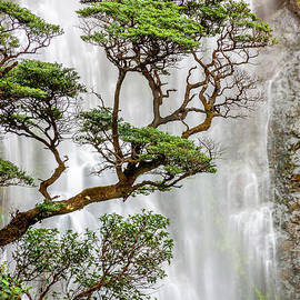 Trees and Waterfall by Colin and Linda McKie