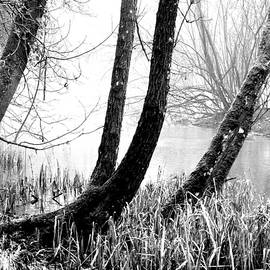 Trees By The Pond In Winter BW by Lynne Iddon