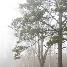 Trees in Fog Along the Banks of the Neuse River-Eastern North Carolina by Bob Decker