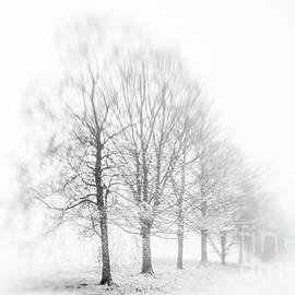 Trees in Fog and Snow by Janet Broughton