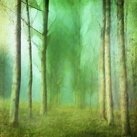 Trees in Mist by Terry Davis