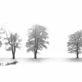 Trees on a Hill by Angelika Vogel