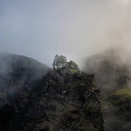 Trees On Misty Rocks