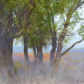 Trees Out On Mormon Row by R christopher Vest