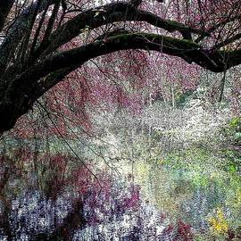 Trees Overhanging The Pond 2 by Lynne Iddon