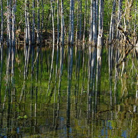 Trees Reflected in River by Sally Weigand