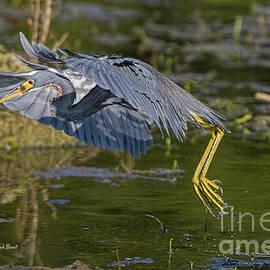 Tri Fishing by Deborah Benoit