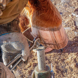 Trimming A Horse's Hoof by Karen Rispin