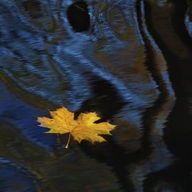 Trip to Autumn by Arkady Sayamov