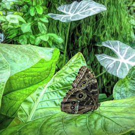 Tropical Butterfly at Rest by Dennis Lundell