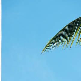 Tropical by Doug Matthews