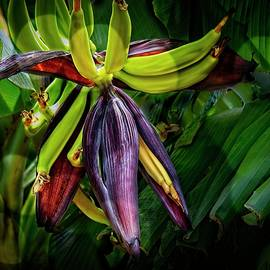 Tropical Flora #3 Banana by LuAnn Griffin