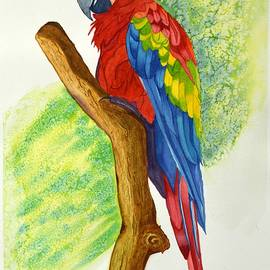 Tropical Macaw bird by Sonali Gangane