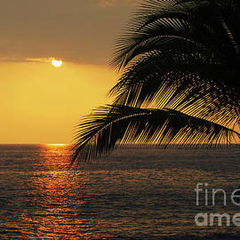 Tropical Ocean Sunset by Catherine Sherman