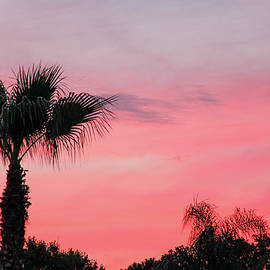 Tropical Sunset in Pink by Donna Kaluzniak
