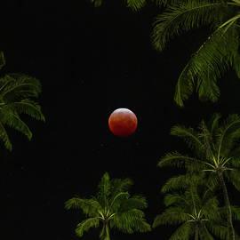 Tropical Super Blood Moon by Sean Davey