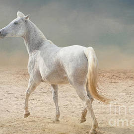 Trotting Arabian Horse by Elisabeth Lucas