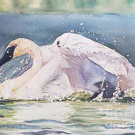 Trumpeter splash by Patricia Pushaw