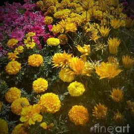 Tuesday Flower's by Julie Grimshaw