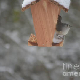 Tufted Titmouse On Bird Feeder by Ruth Housley