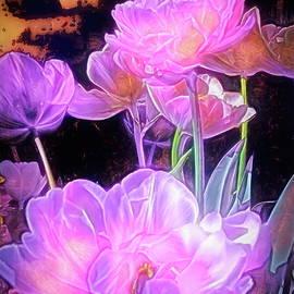 Tulip 36 by Pamela Cooper