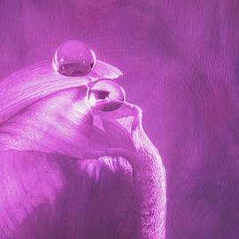 Tulip Eyes by Tom Mc Nemar